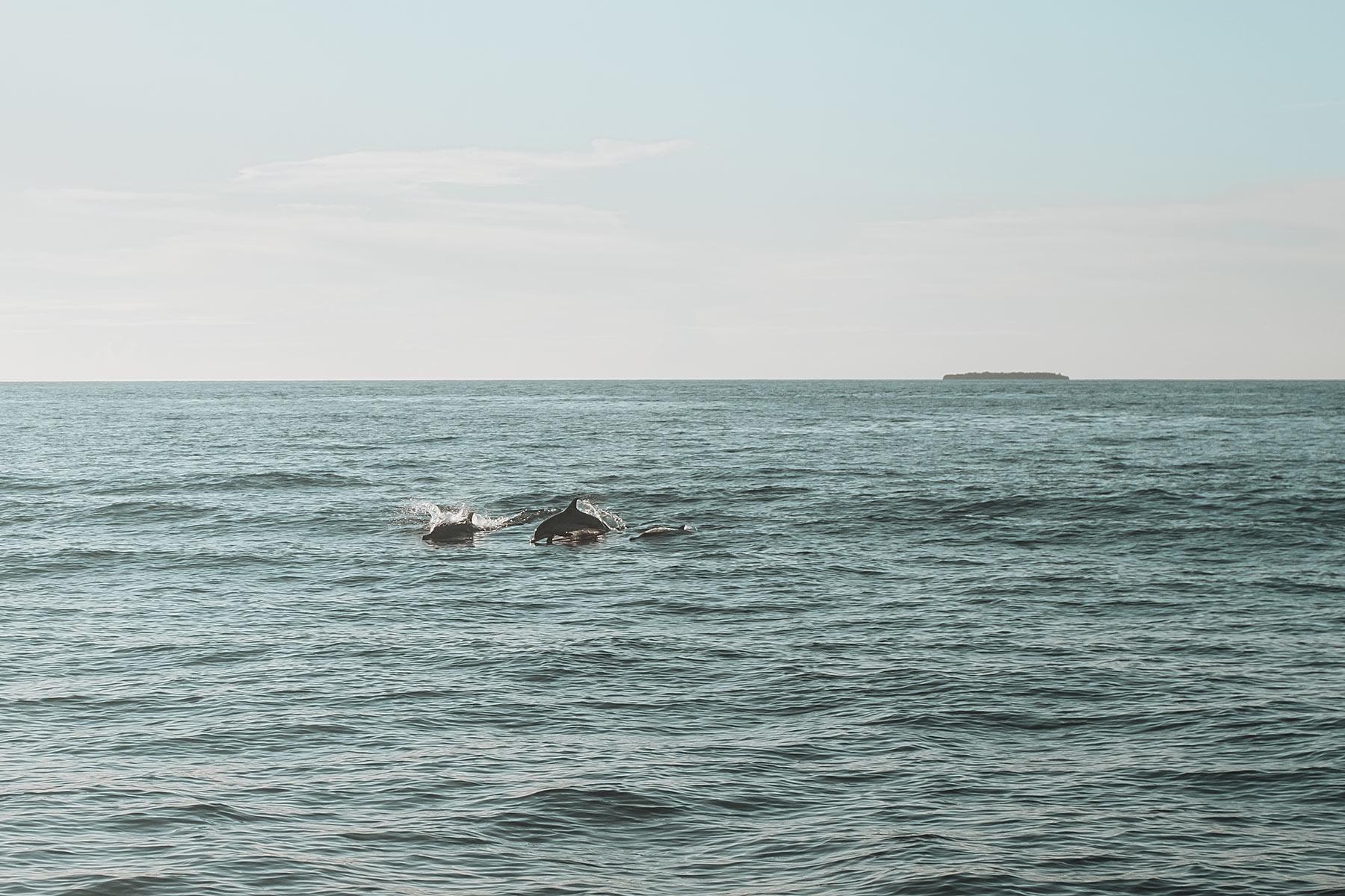 faarufushi maldives delfine travel blog sunnyinga