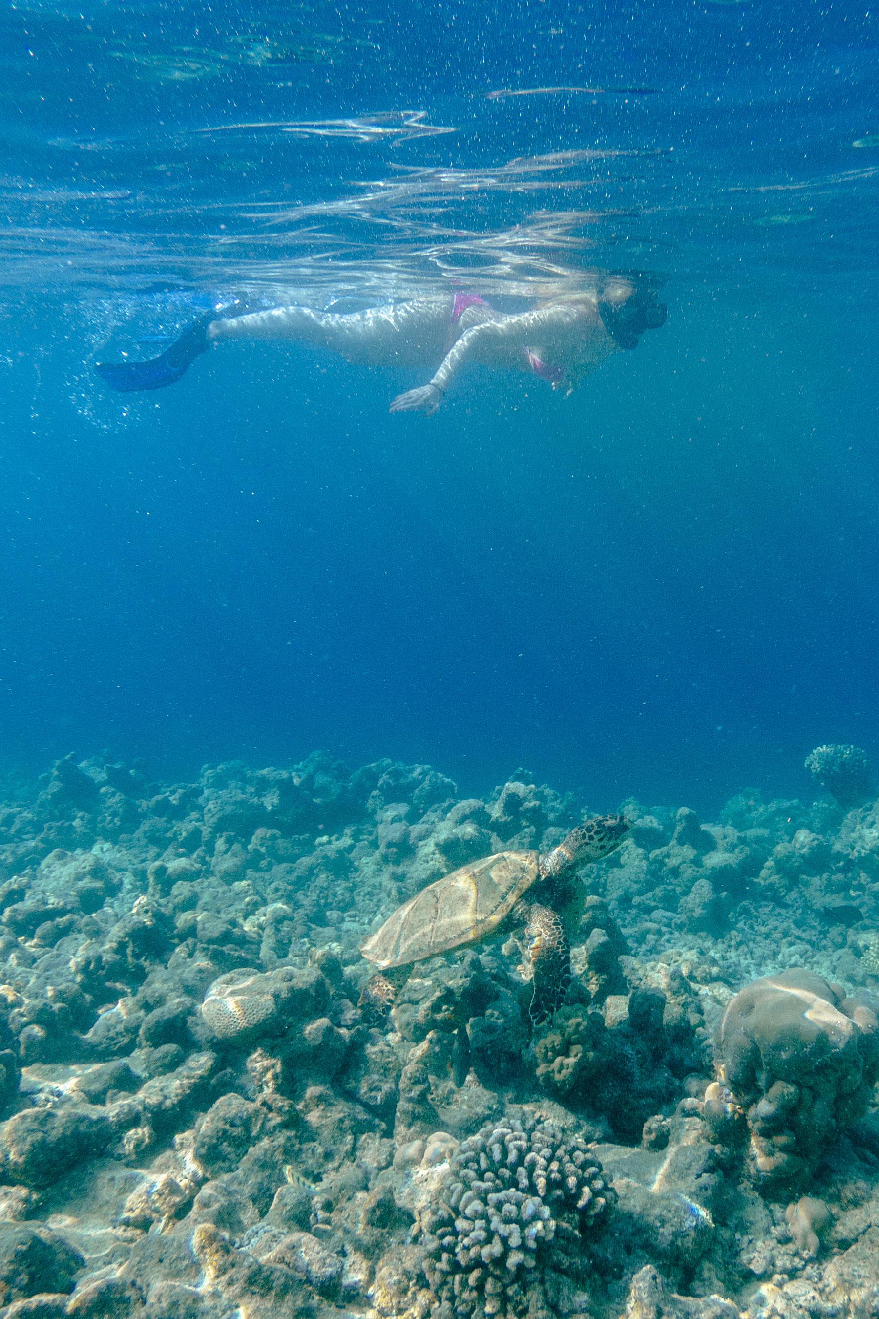 schnorcheln malediven dhigali schildkröte travel blog sunnyinga