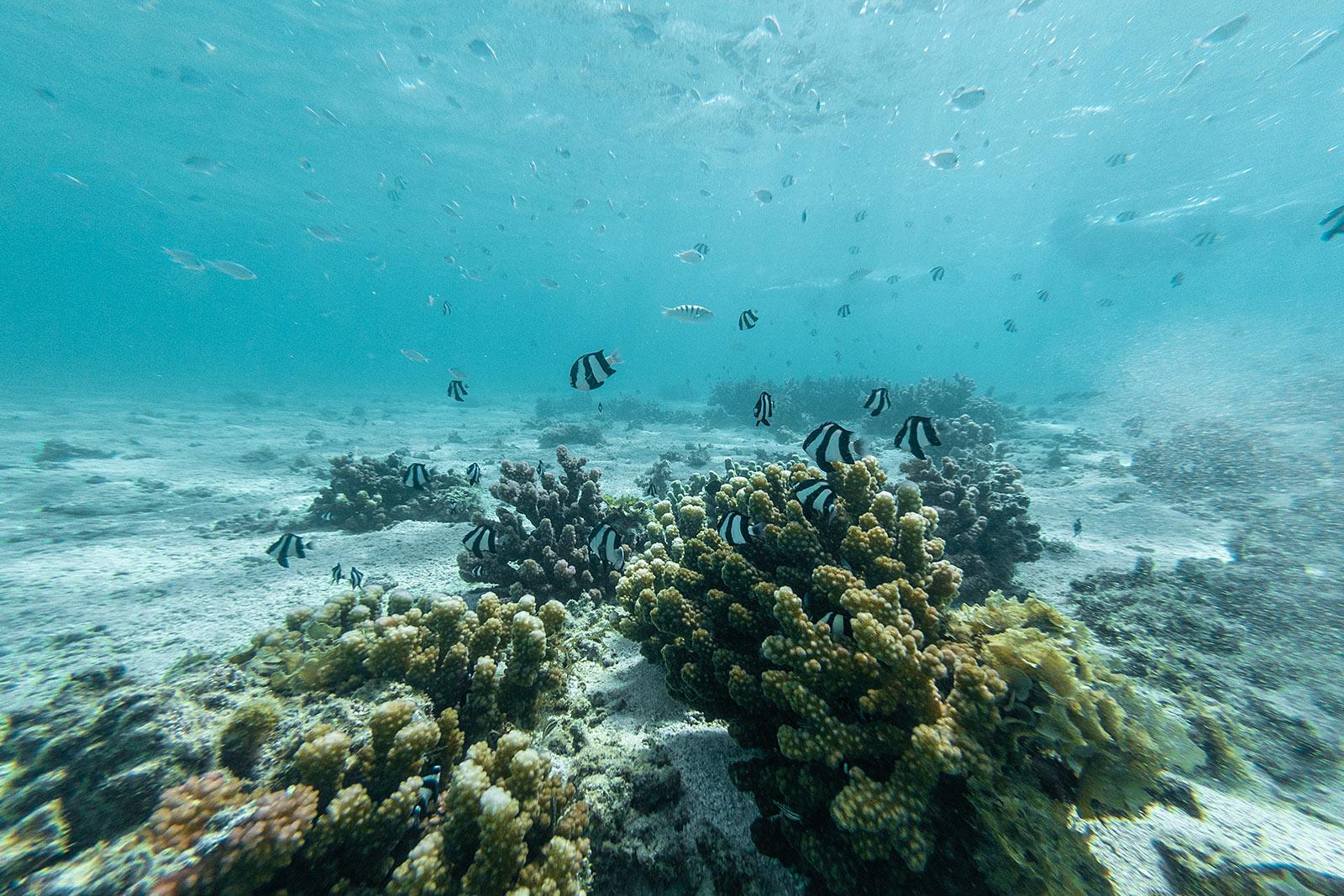 schnorcheln mauritius riff fische travel blog sunnyinga